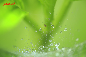 クモの巣と水滴