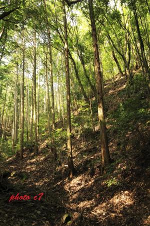 サンコウチョウの鳴いていた林